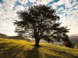 Spiritualität: Hoffnung oder Humbug?